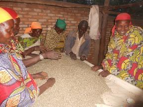 Triage du café du Rwanda