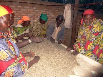 Caf� de Tanzanie Mbozi