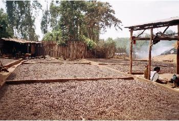 Caf� d'Ethiopie Gidaamii
