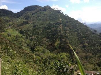 Caf� de Colombie Granja La Esperanza